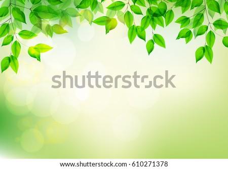 green fresh leavesblurred