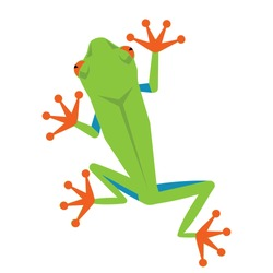 green frog, colorful amphibian, isolated on white background