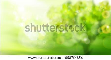 green garden in strong sunlight