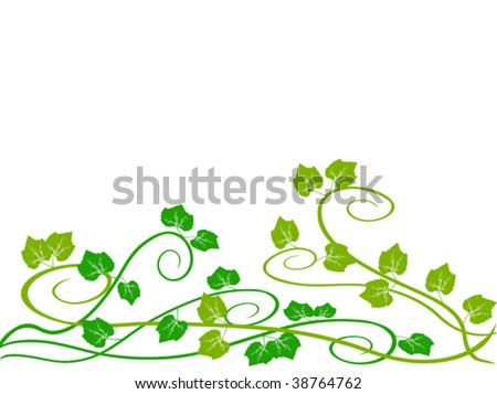 grape vine clipart. vector : green grape vine