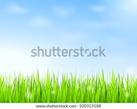 green grass and blue sky with