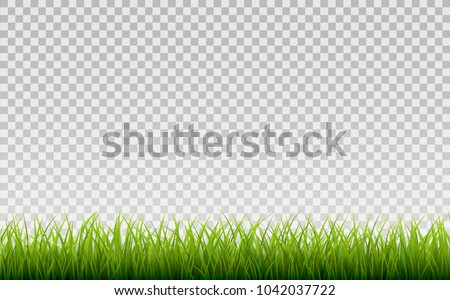 green grass border  isolated on