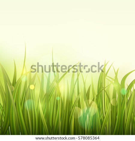 green grass colorful sunset or