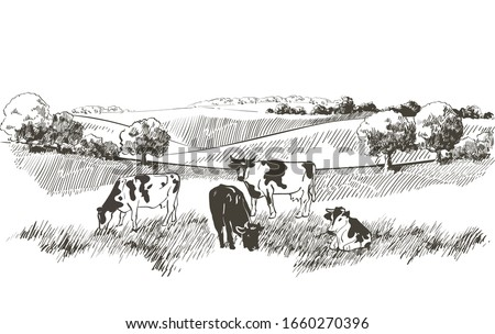 Green grass, field on hills. Meadow, alkali, lye, grassland, lea, pasturage landscape. Flock of cows, calves field,  trees, animals, farm and countryside pastures panorama. Vector sketch illustration