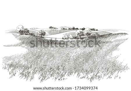Green grass field on small hills. Meadow, alkali, lye, grassland, pommel, lea, pasturage, farm. Rural scenery landscape panorama of countryside pastures. Vector sketch illustration Сток-фото ©