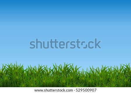 green grass isolated on blue