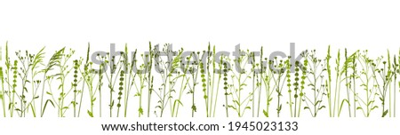 Green grass isolated on white - seamless border with natural herbs - row of wild herbs - herbal silhouettes for spring and summer design Foto d'archivio ©