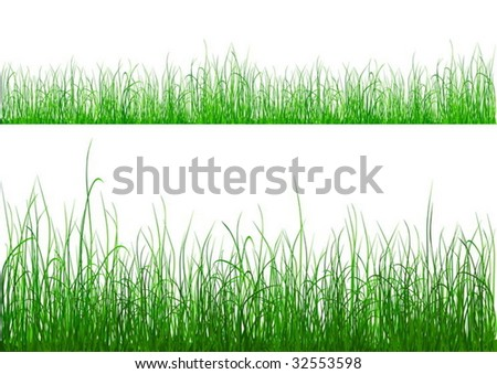 Green grass isolated on white - vector
