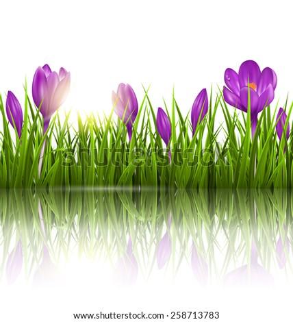 green grass lawn  violet