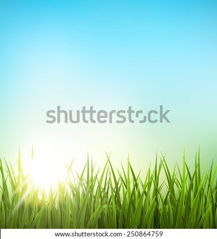 green grass lawn with sunrise