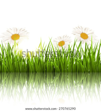 green grass lawn with white