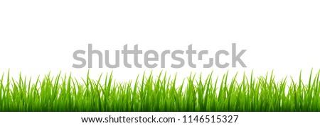 green grass meadow border
