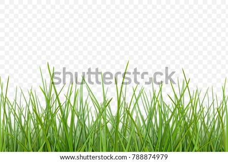 green grass meadow border