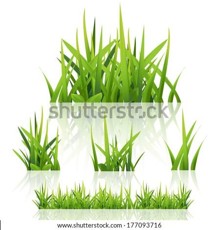 Green grass nature, vector