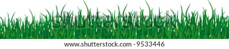 Green grass of different shades on a white background. It is very convenient to use this picture for a background or in your collage.