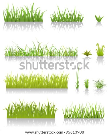 Green Grass Set/ Illustration of a set of various green blades of grass and other thin leaves for  spring or summer time