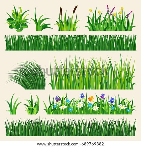 green grass showing roots