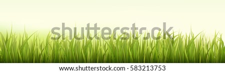 Green grass. Spring or summer background. Wide, long format good for web. Vector Illustration.