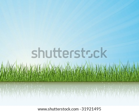 green grass under the sunlight