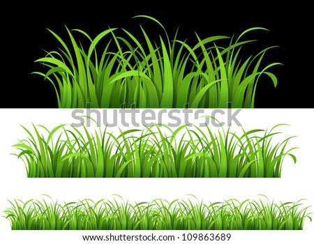 Green grass. Vector illustration