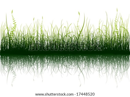 Green grass with reflection isolated on white - vector