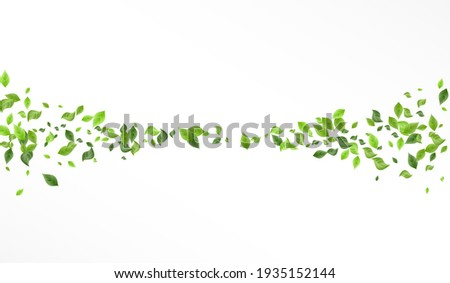 Green Greenery Blur Vector White Background Branch. Flying Leaves Template. Olive Foliage Forest Design. Leaf Realistic Brochure.