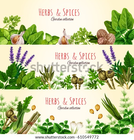 green herbs and spices cartoon