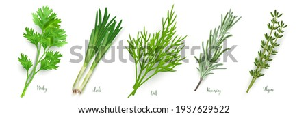 Green herbs set on white background. Thyme, rosemary, parsley, dill, leek spices vector illustration. Herbal seasoning ingredients for cooking. Healthy cuisine condiments.