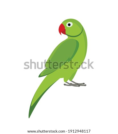 green indian parrot isolated on white background Сток-фото ©