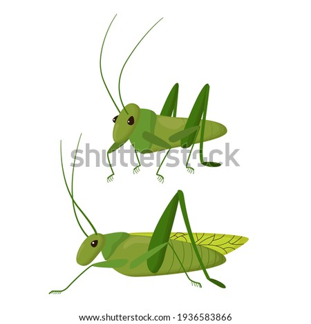 green insect on a white