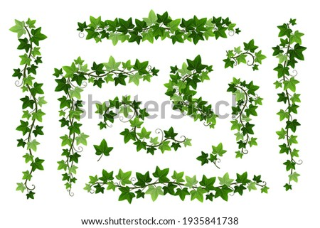 Green ivy creeper branches isolated on white background. Hedera vine frames and borders, botanical design element. Vector illustration of hanging or wall climbing ivy plants Foto stock ©