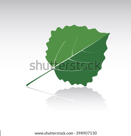 green leaf of aspen vector