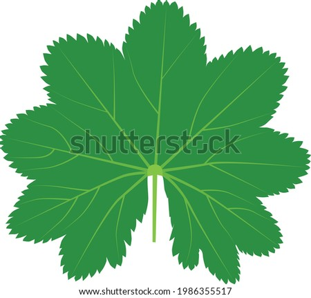 green leaf of the medicinal