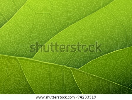 Green leaf texture. Vector background, EPS10