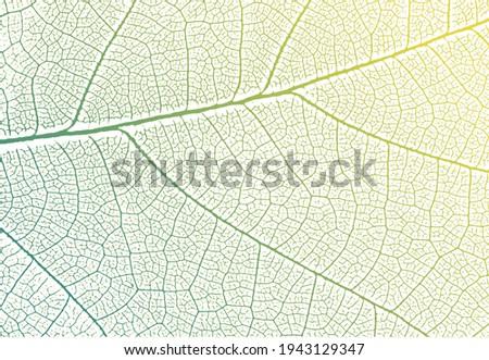 green leaf veins texture