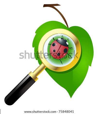 Green leaf with ladybug is under the magnifying glass