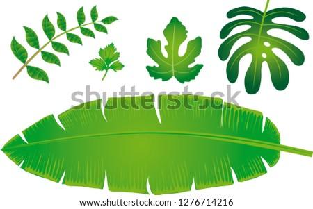 Green Leafes, Curry Leafe, Celery Leafe, Fig Leaf, Dragon Leafe and Banana Leafe - Vector Illustration