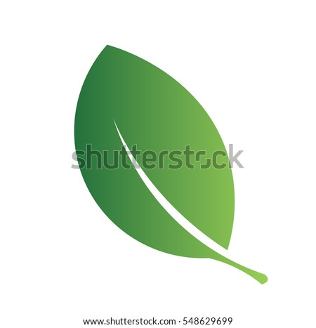 green leave isolated on white background