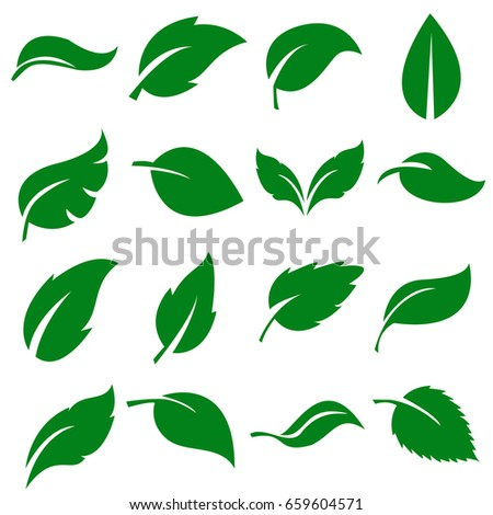 Green Leaves Collection. Set of leaf .Vector Illustration