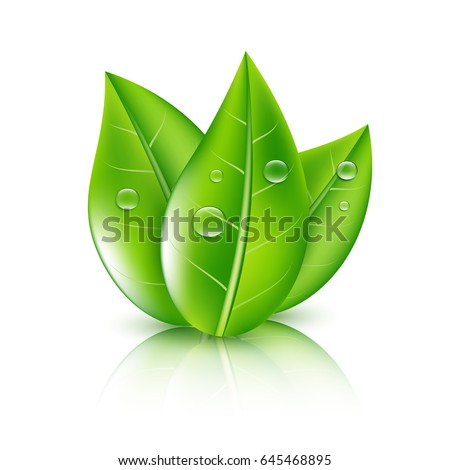 green leaves ecology concept