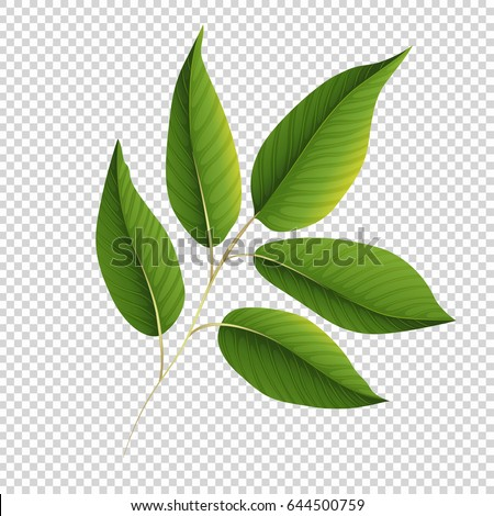 Green leaves on transparent background illustration