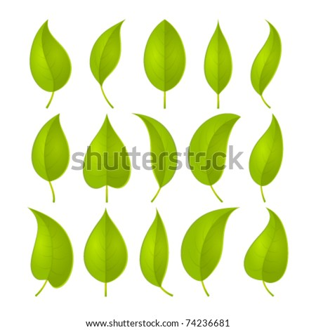 green leaves set. vector...