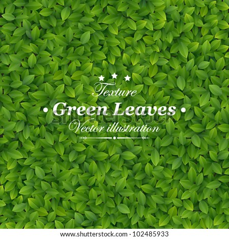 Green leaves texture. Vector illustration.