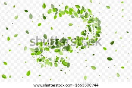 Green Leaves Vector Wallpaper. Grassy Greens Tea Illustration. Spring Brochure. Swamp Foliage Swirl Background.