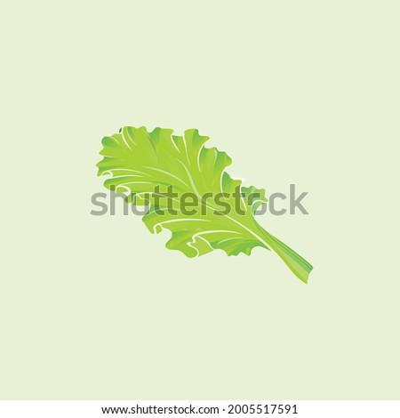 Green lettuce leaf vector flat style illustration, Cartoon style lettuce leaf  drawn flat vector icon isolated on white. Fresh lettuce leaf symbol icon. Green lettuce leaf illustration