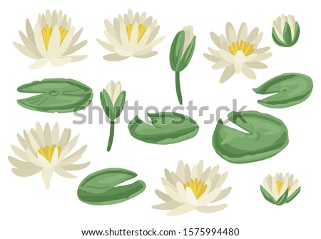 green lily pads with lotus