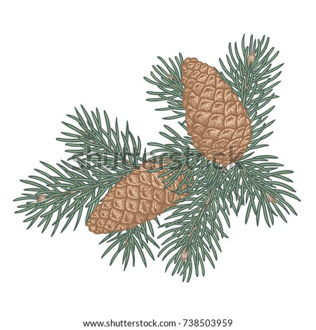 Green lush spruce branch and pine cone. Traditional Christmas decoration symbol for greeting card, poster, textile, banner, website.