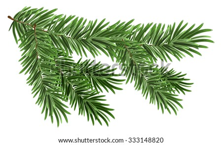 Shutterstock Green lush spruce branch. Fir branches. Isolated on white vector illustration