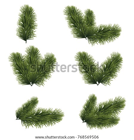 Green lush spruce branches for Christmas background. Vector illustration.
