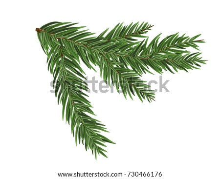 Green lush spruce or pine branch. Fir tree branch isolated on white vector christmas element.